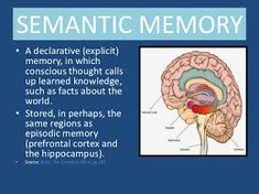 semantic memory - Google Search Episodic Memory, Cognitive Psychology, Consciousness, Knowledge, Facts, Memories, Thoughts, Google Search, Mindfulness