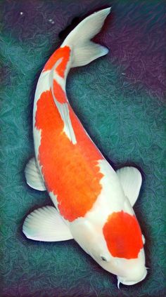 Koi Fish Drawing, Fish Drawings, Koi Art, Fish Art, Tancho Koi, Koy Fish, Koi Painting, Aqua Culture, Carpe Koi
