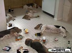 After a Basset Party! #BIONIChumor www.bionicplay.com