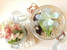 DIY terrarium : mes succulentes en pots • Hellocoton.fr