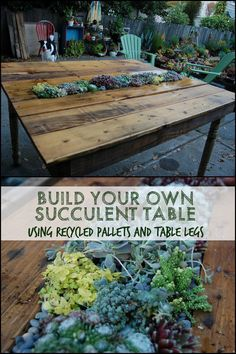 Can you believe that this beautiful table with a living centrepiece was made from recycled pallets and some old table legs? Wooden Crate Coffee Table, Log Coffee Table, Wooden Dog House, Build A Dog House, Recycled Pallets, Wooden Pallets, Recycled Materials, Table Palette, Painted Kitchen Tables