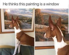 CLICK PICTURE FOR MORE FUNNY PİCTURES - 5 Funny Pictures Of Today - #funnymemes #funnypictures #funnyanimals #funny #lol #haha #memes #funnytexts #funnyquotes