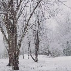 Christmas Scenery, Winter Scenery, Winter Snow, Winter Christmas, Christmas Aesthetic Wallpaper, Snow Scenes, Winter Beauty, Winter Pictures, Winter Landscape