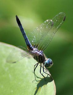 Dragonfly photo by Lori Dunn.