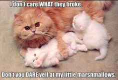 Love this protective cat mama! Awwww! http://sulia.com/my_thoughts/7212ebad-49b1-4ca8-9e6e-eb9fc6147489/?source=pin&action=share&ux=mono&btn=small&form_factor=desktop&sharer_id=125706103&is_sharer_author=true&pinner=125706103