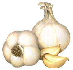 Food illustration of two whole heads of garlic and two garlic cloves.