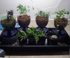 Compact, Cheap, and Expandable Hydroponics System
