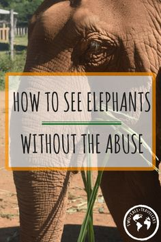 Riding an elephant was always something  I wanted to do, but after researching for our trip to Thailand we found a much kinder and fun way to interact with them! Read on to find out how we spent two days with these majestic creatures!