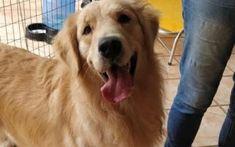 O GRITO DO BICHO 3: Vereadores aprovam lei que proíbe cachorro de lati... Lei, Animals, Dog, Lugares, Animales, Animaux, Animal, Animais