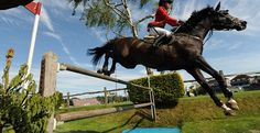 Hickstead! an amazing horse its such a shame he was lost so early