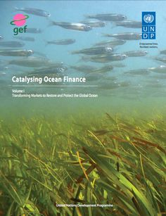 United Nations Development Programme (UNDP) and Global Environment Facility (GEF) produced a report presenting three major instruments that have proven highly effective at promoting science-based, long-term integrated planning and barrier removal to transform markets and create sustainable productive use patterns of coastal and ocean resources over the past 20 years. Environmental Research, United Nations, 20 Years, Sustainability, Coastal, Finance, The Past, Instruments, How To Remove