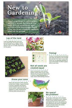Great for the beginner | VegetableGardener