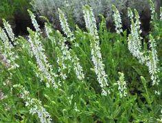 luchtvervuiling. Herbs, Garden, Plants, Photos, Garten, Gardening, Herb, Plant, Outdoor