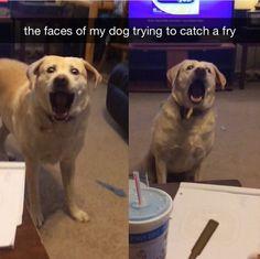 This dog.