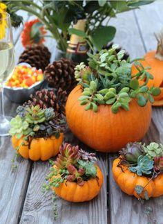 Left over pumpkins