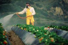 Pesticidi nelle acque cresce percentuale di punti contaminati