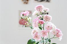 Bonjour Johanna: i n s i d e#Repin By:Pinterest++ for iPad#