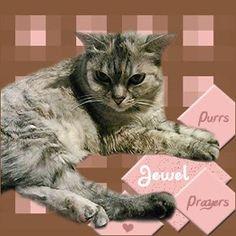 Fur Everywhere Jewel needs purrs and prayers please.