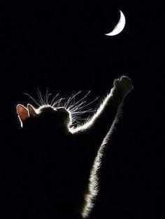 月に願いを…