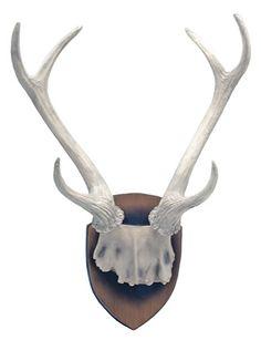 Hunter's Trophy Deer Antlers Wall Plaque Only $25