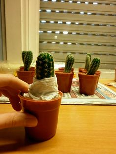 Cómo injertar cactus paso a paso Cactus Terrarium, Cactus Planta, Cactus Y Suculentas, Cacti And Succulents, Potted Plants, Flower Band, Cactus Flower, Garden Design, Planter Pots