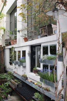 Zinc window boxes against windowsills & suspended from branches with steel frames & removable chestnut planks