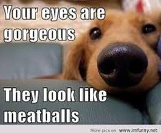 Image result for funny animals with sayings