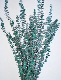 Preserved Eucalyptus Branches For Green