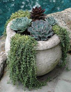 Succulent Bonsai, Succulent Gardening, Garden Pots, Container Gardening, Succulents In Containers, Cacti And Succulents, Planting Succulents, Cool Plants, Air Plants
