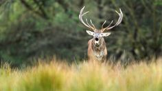 End of the rutting season - Today it was the end of the rutting season here in my region. It was a fantastic time.