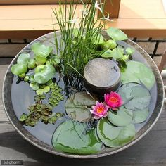 Compact water features, small-space landscaping, garden inspiration, and of course all things relating to container water gardening, patio ponds and much more. Small Water Gardens, Container Water Gardens, Indoor Water Garden, Backyard Water Feature, Container Gardening, Container Pond, Large Water Features, Indoor Water Features, Water Features In The Garden