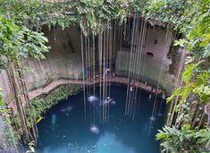 """Cenotes en Yucatán, México Estos profundos """"agujeros"""" formados en la era glacial eran considerados sagrados por los Mayas y están intercone..."""