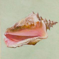 Original Pastel Drawing SEASHELL by Robert Antell From Bath, England