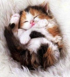 So sweet! Calico kitten.