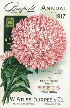 Vintage Seed Catalog - Burpee's Annual 1917 Seed Catalog