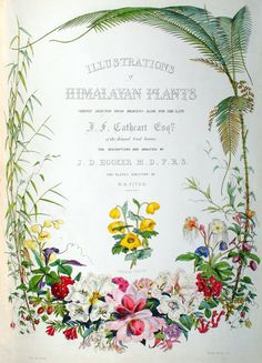 Botanical illustrations of Himalayan plants - Joseph Dalton Hooker
