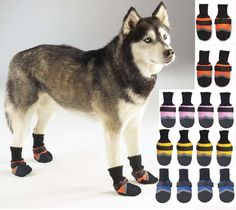 Kimbo is not liking the sub zero temps and the snow..might have to torture him with these