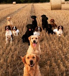 I would love to own that many dogs!!!