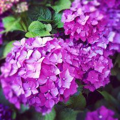 my favorite flower ever!