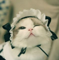 Cute cat cosplay Lovely puppy #animal #cute #puppy #cosplay #pet