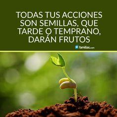 Tus acciones son semillas que darán frutos