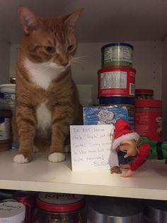 Santa cookie-testing fail Santa Cookies, Shelf, Treats, Sweet Like Candy, Shelving, Goodies, Shelving Units, Sweets, Shelves