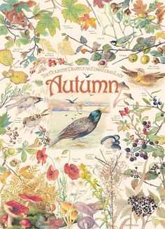 Birds, berries and beautiful fall colors are the focus in the this lovely 1000 piece puzzle, Country Diary: Autumn from the collection of Edith Holden. Edith Holden, Autumn Illustration, Botanical Illustration, Nature Journal, Illustrations, Autumn Leaves, Autumn Flowers, Flowers Nature, Halloween