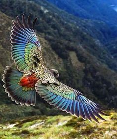 Pretty Birds, Beautiful Birds, Animals Beautiful, Nature Animals, Animals And Pets, Cute Animals, Exotic Birds, Colorful Birds, Funny Bird