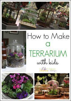 Fun gardening idea for Exploring Creation with Botany! How to Make a Terrarium with Kids Raised Garden Planters, Garden Bugs, Garden Sheds, Bottle Garden, Glass Garden, How To Make Terrariums, Plant Science, Back Gardens, Fairy Gardens