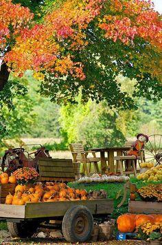 pumpkin stand, scarecrow
