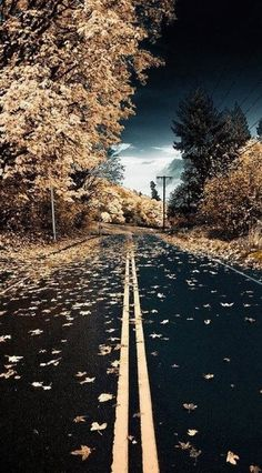 Autumn road in Kent, Washington • photo: Connor Surdi on Flickr