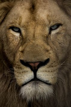 The King of kings!! The Lion of Judah!!