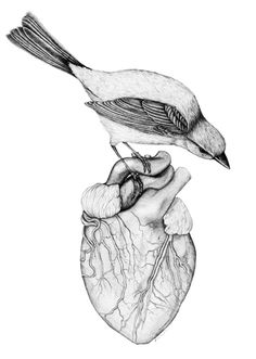 """Fantastic drawings by UK-based artist Amy Dover. """"Among the animals Dover renders recurrently are birds, wolves, bunnies and bears. Beautiful Pencil Drawings, Heart Illustration, Anatomical Heart, Heart Art, Artwork, Art Drawings, Sketches, Painting, Street Art"""