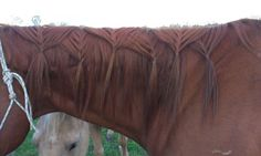 Your attempts at fancy braids. - Page 6 - The Horse Forum